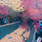 紅葉日和!!