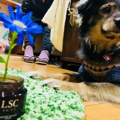 『LSCに咲く花』
