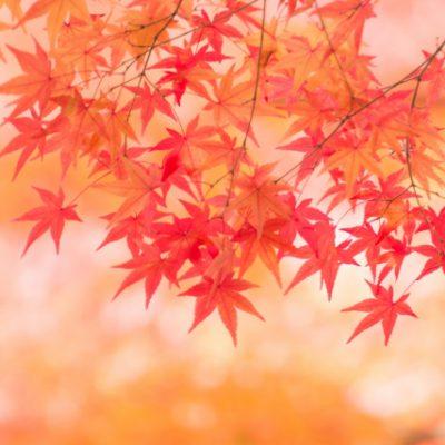 秋は美容に重要な時!