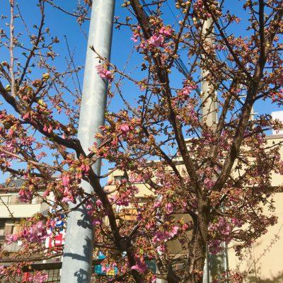 春もすぐそこ