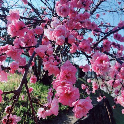 春の訪れ✿