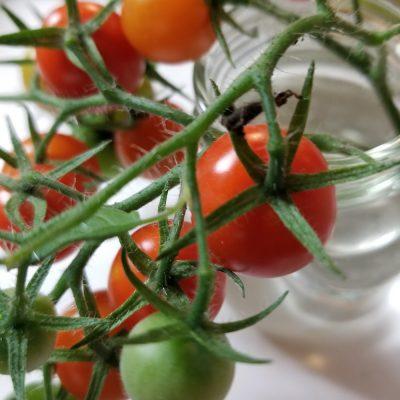 小腹と薬膳とワタシ・薬膳:医者いらずなトマト?